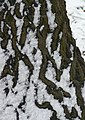 Snow patterns - geograph.org.uk - 1166272.jpg