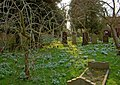 Snowdrops in profusion in Kirk Bramwith churchyard ^2 - geograph.org.uk - 1184421.jpg