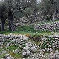 Soller Olives.JPG