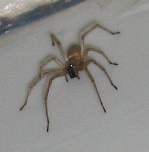 Spider 028