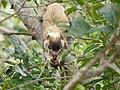 Sri Lanka Photo065.jpg