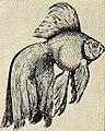 St. Nicholas (serial) (1873) (14781890821).jpg