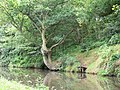 Staffordshire and Worcestershire Canal - geograph.org.uk - 495496.jpg