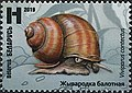 Stamp of Belarus - 2019 - Colnect 856968 - Lister s River Snail Viviparus contectus.jpeg