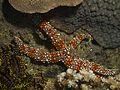 Starfish (6997589975).jpg