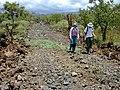 Starr-020422-0100-Myoporum sandwicense-habitat with Kim and Mike-Puu o Kali-Maui (24548487405).jpg