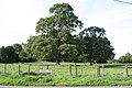 Stately trees off School Lane, Thriplow - geograph.org.uk - 964333.jpg