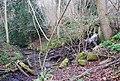 Stream between Pale Park Pond and Heron Pond - geograph.org.uk - 382820.jpg