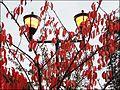 Stroud ... red and gold at Waitrose. - Flickr - BazzaDaRambler.jpg