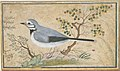 Study of a Bird MET DT4829.jpg