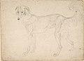 Study of a Dog Facing Left MET DP804686.jpg