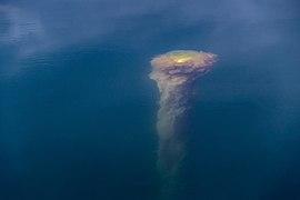 Submerged buoy with algae at Rågårdsdal 2.jpg