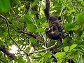Sulawesi trsr DSCN0562 v1.JPG