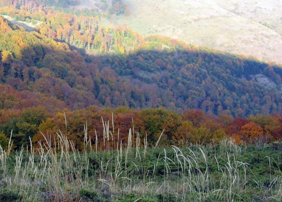 Sume-trava-Stare-planine