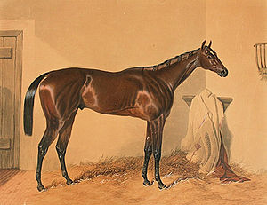 Surplice (horse) - Surplice. Etching by Charles Hunt after a painting by Harry Hall.
