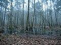 Swamp next to the Teufelsbruch swamp in winter 4.jpg