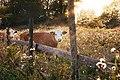 Sweden (Unsplash vrT3Z9UKFEg).jpg