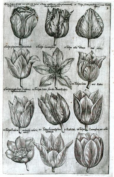 Sweerts florilegium
