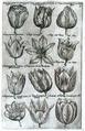Sweerts florilegium.tif
