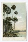 Tall Palms, St. Johns River, Florida (NYPL b12647398-68177).tiff