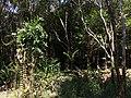 Tangkiling Nature 12.jpg