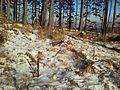 Tatranska Lomnica - panoramio (23).jpg
