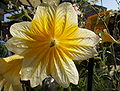 Template Flower1.JPG