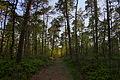 Teutoburger Wald Birgter Berg 05.JPG