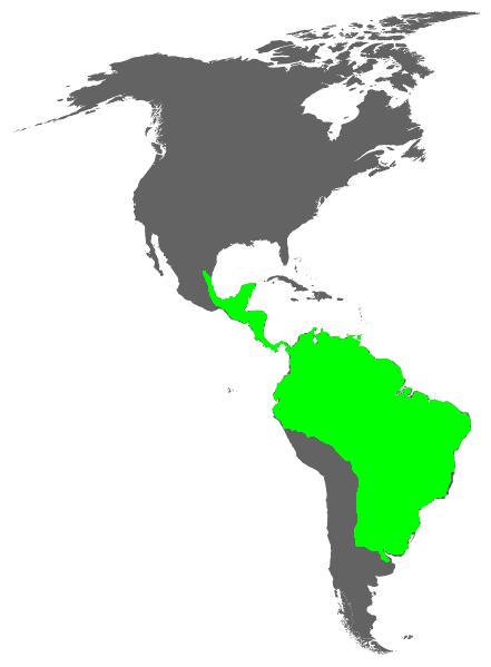 Thamnophilidae distribution