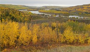 Peace River - The Peace River as it winds past the town of Peace River during the autumntime.