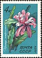 The Soviet Union 1971 CPA 4082 stamp (Cactus Epiphyllum).jpg