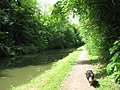 The Towpath of the Grand Union Canal east of Bridge No 134 - geograph.org.uk - 1340265.jpg