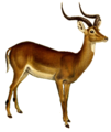 The book of antelopes (1894) Aepyceros melampus white backround.png