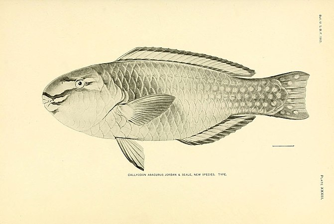 The fishes of Samoa (Plate XXXIII) (5998445267).jpg