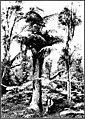 The indigenous trees of the Hawaiian Islands (1913) (20732739461).jpg