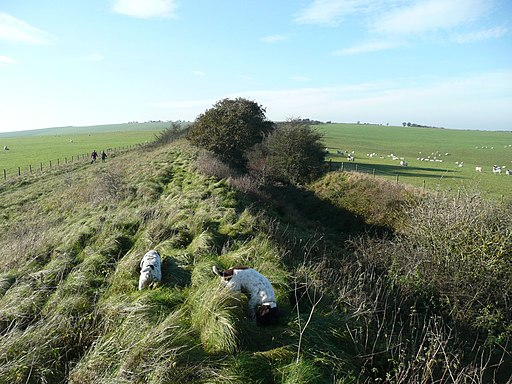 The springers explore Wansdyke (geograph 2705555)