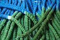 Tie dye (4571609796).jpg