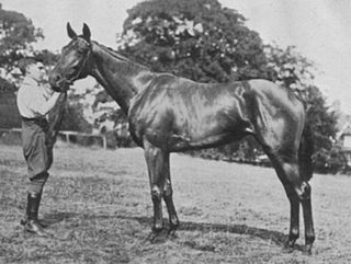 Tiffin (horse) Thoroughbred racehorse