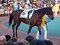 Tokyo Daishoten Day at Oi racecourse (31849420761).jpg