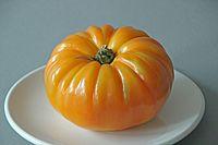 Tomatensorte Saveol Ananas 02 (fcm).jpg