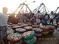 Tonnes of sardines at Rameswaram fishing port in India..JPG