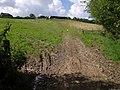 Track across field - geograph.org.uk - 494053.jpg