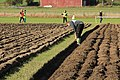 Tractor ploughing national championships Finland 2014 02.JPG