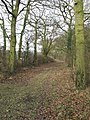 Tree Lined Path - geograph.org.uk - 1153801.jpg