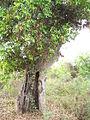 Tree hollow (2).JPG