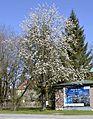 Tree in Obermenzing, Munich 2014.JPG