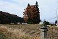 Tree of Totoro (Ver.Y) (5171146856).jpg