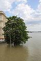Tree on the high embankment.JPG