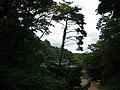 Trees-Golgulsa-Gyeongju-Korea-01.jpg