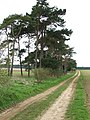 Trees and track - geograph.org.uk - 754526.jpg
